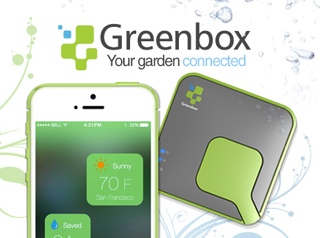 greenbox-cat-image