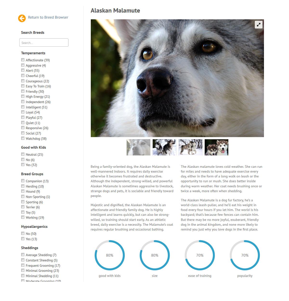 puppies_plus_dogs_alaskan
