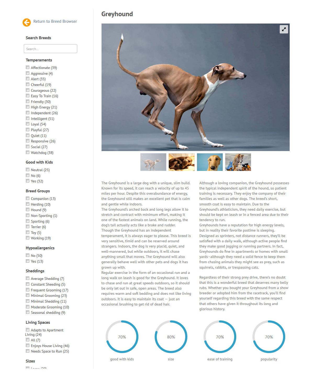 puppies_plus_dogs_greyhound